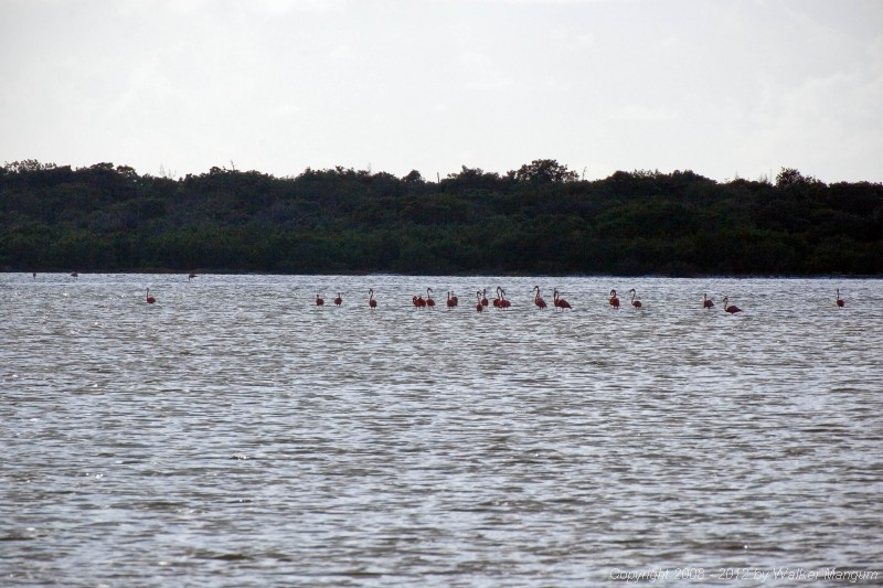 Flamingos on Red Pond.