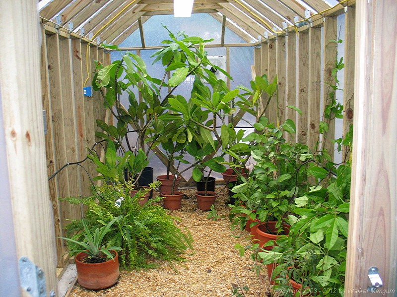 Plants inside! Plumeria at rear, passion fruit along right side.