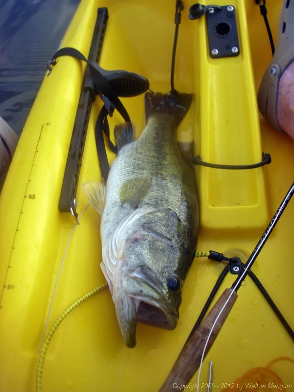 Bass in da boat!  20.5 inches - 5 lb. 4 oz.